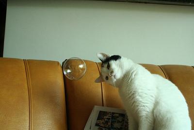 kittybubble