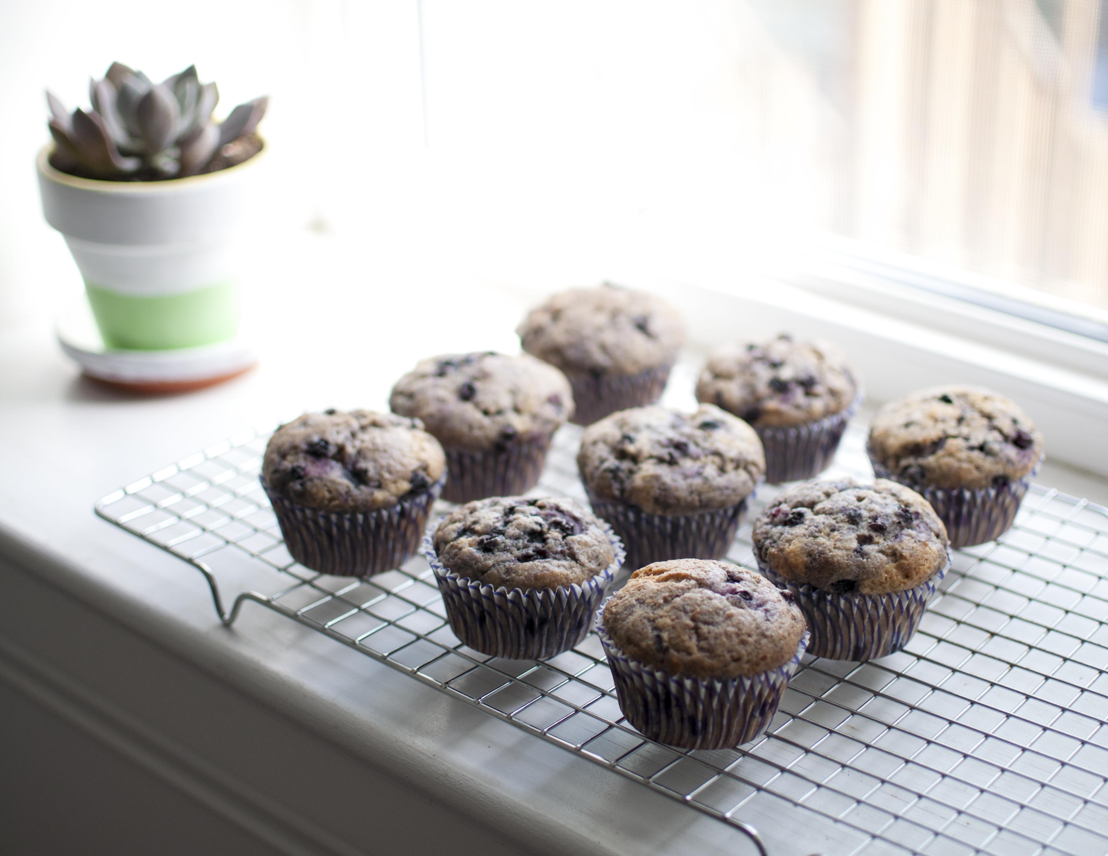 blueberrymuffins_plant