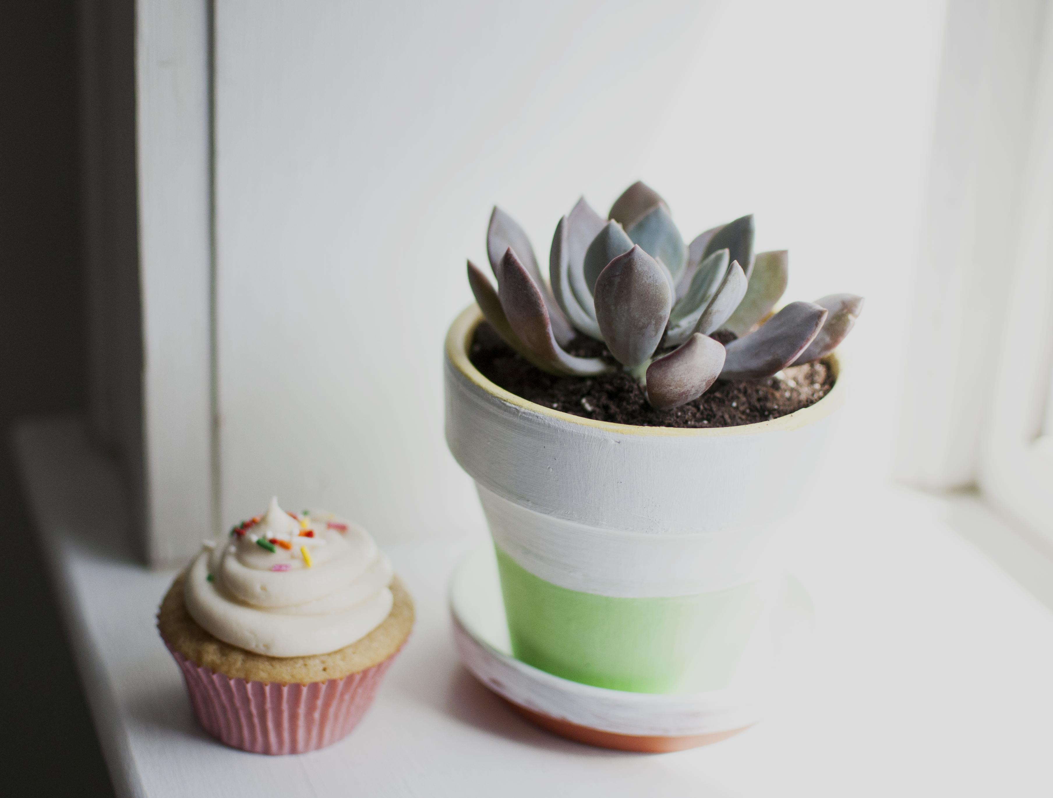 cupcakeandplant